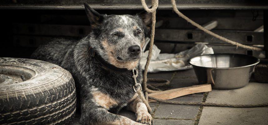 dog-1426490_1280